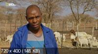 Намибия: убежище гигантов / Namibia. Sanctuary of Giants (2016) HDTVRip